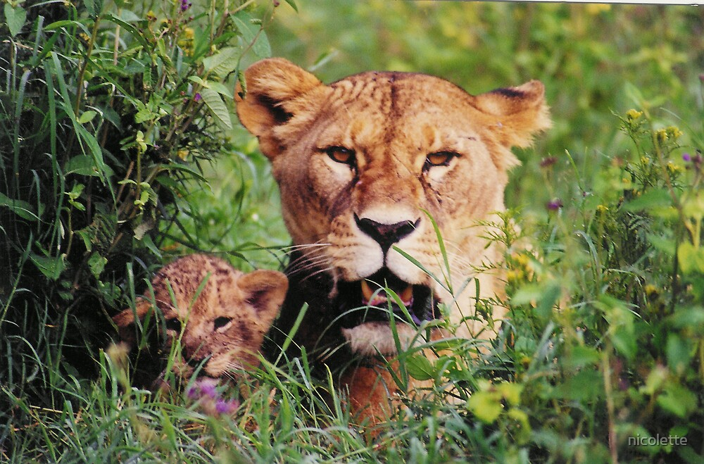 lion cub and mum by nicolette