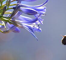 Bumble Bee by Johann  Koch