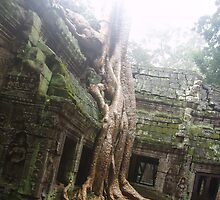 The Ta Prohm Tree..  by liqwidrok