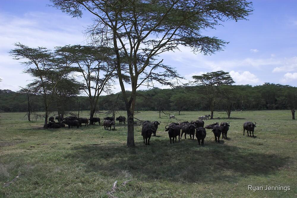 Wild Buffalo grazing under the trees by Ryan Jennings