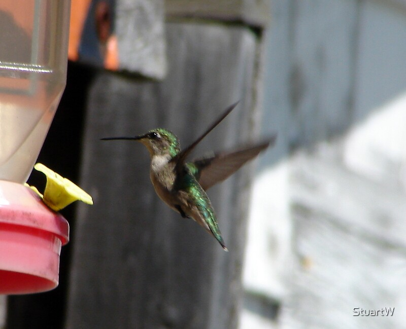 Landing for Lunch by StuartW