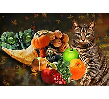 TABBY CAT WITH HORN OF PLENTY FALL PICTURE AND OR CARD Photographic Print