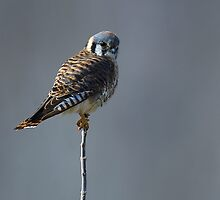 Perch by Mundy Hackett