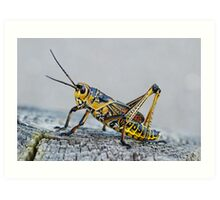 Painted Grasshopper Art Print