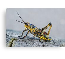 Painted Grasshopper Canvas Print