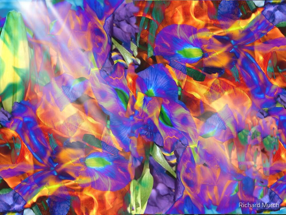 Iris - Fire and Light by Richard Murch