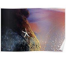 Seashore Dreaming Poster