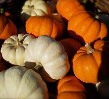 Pumpkin Patch by Pamela Maxwell