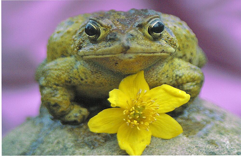 Flower Frog by Beaner