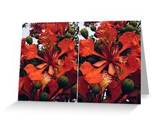 Red Flamboyant Flowers Collage Greeting Card