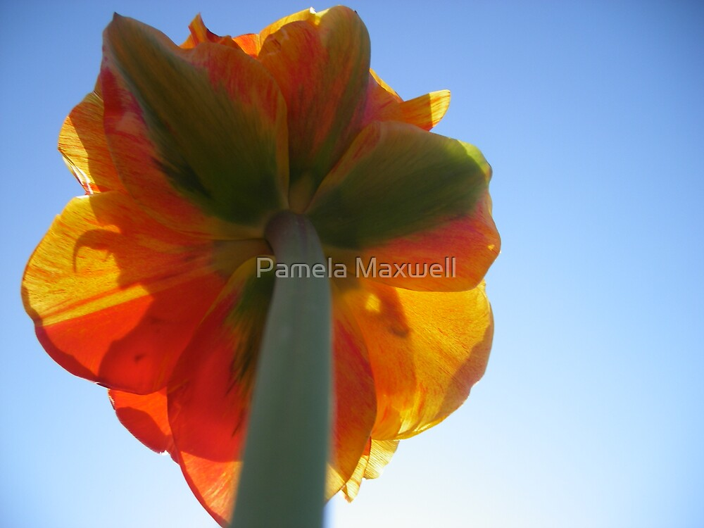 Orange in the Sky by Pamela Maxwell