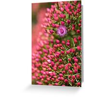 Featherflower explosion Greeting Card