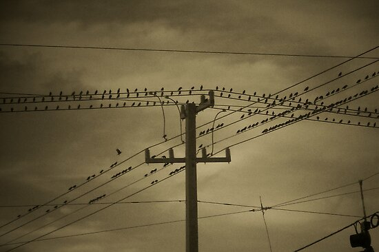BIRDS ON THE WIRE by nikki024