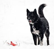 Dog plays in the snow by Brent Olson