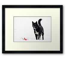 Dog plays in the snow Framed Print