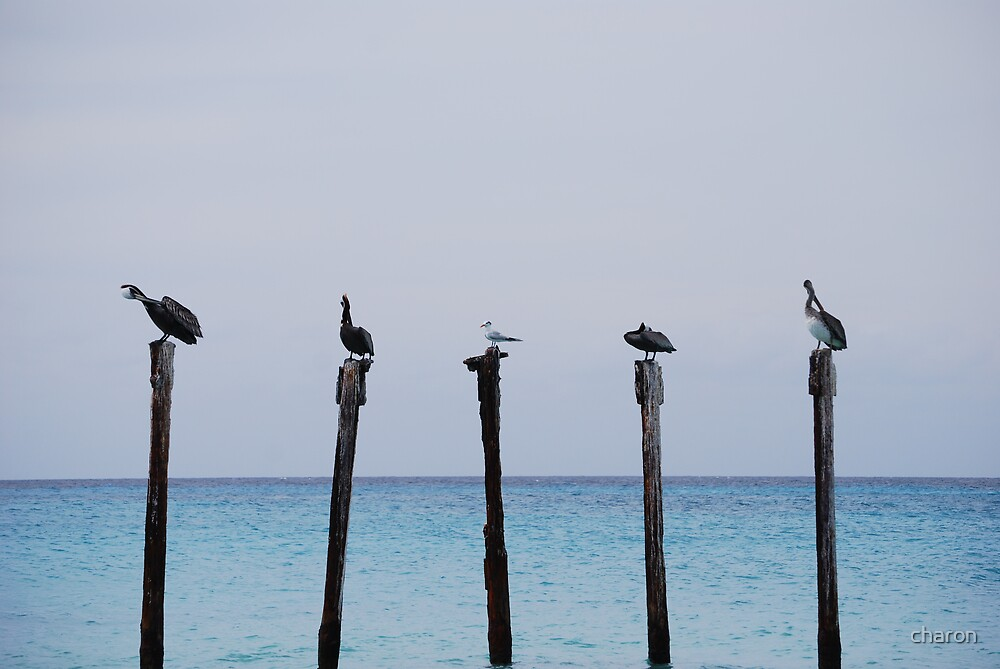 pelicans by charon