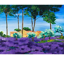 Among the Lavender Photographic Print