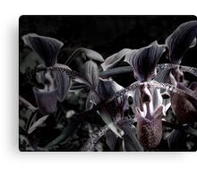 Wild Orchids (Lady's Slipper Orchids) Canvas Print