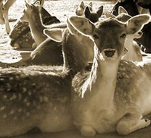 Deer by thetoddclan