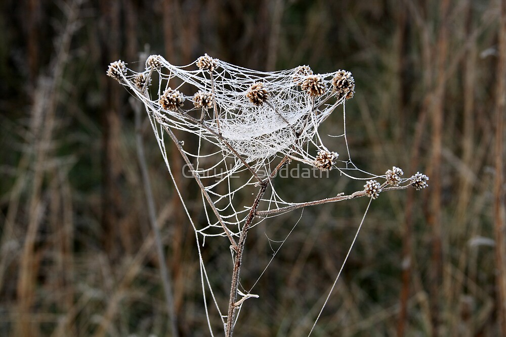 Frosty Web by Gary L   Suddath
