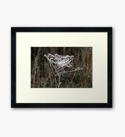 Frosty Web Framed Print