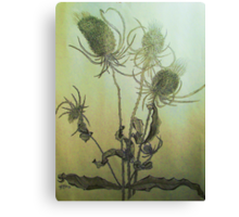 Thistle in Autumn Canvas Print