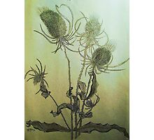 Thistle in Autumn Photographic Print