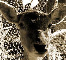 Deary Deer by thetoddclan