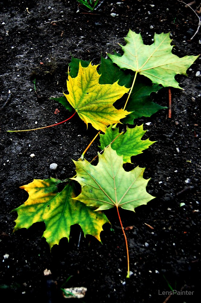 Dead Leaves on the Dirty Ground by LensPainter