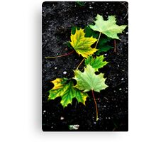 Dead Leaves on the Dirty Ground Canvas Print