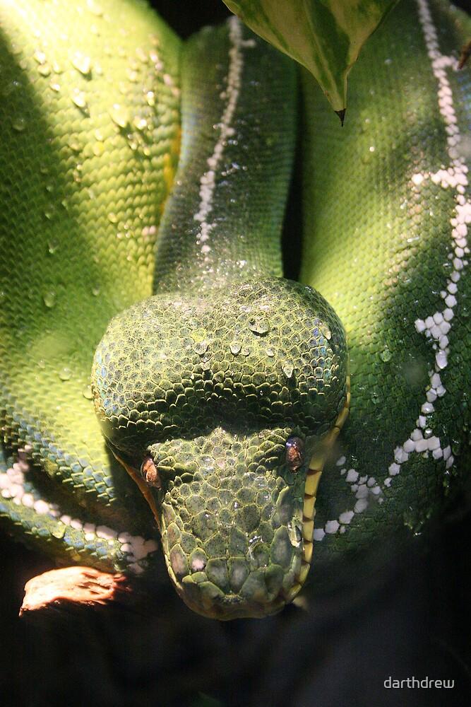 Emerald Boa by darthdrew