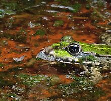 """Chives""  The Star Frog summer in all its forms 39   (h)(c) by Olao-Olavia / Okaio Créations fz 1000 by okaio caillaud olivier"