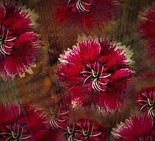 Burgundy flower design by ♥⊱ B. Randi Bailey