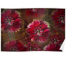 Burgundy flower design Poster