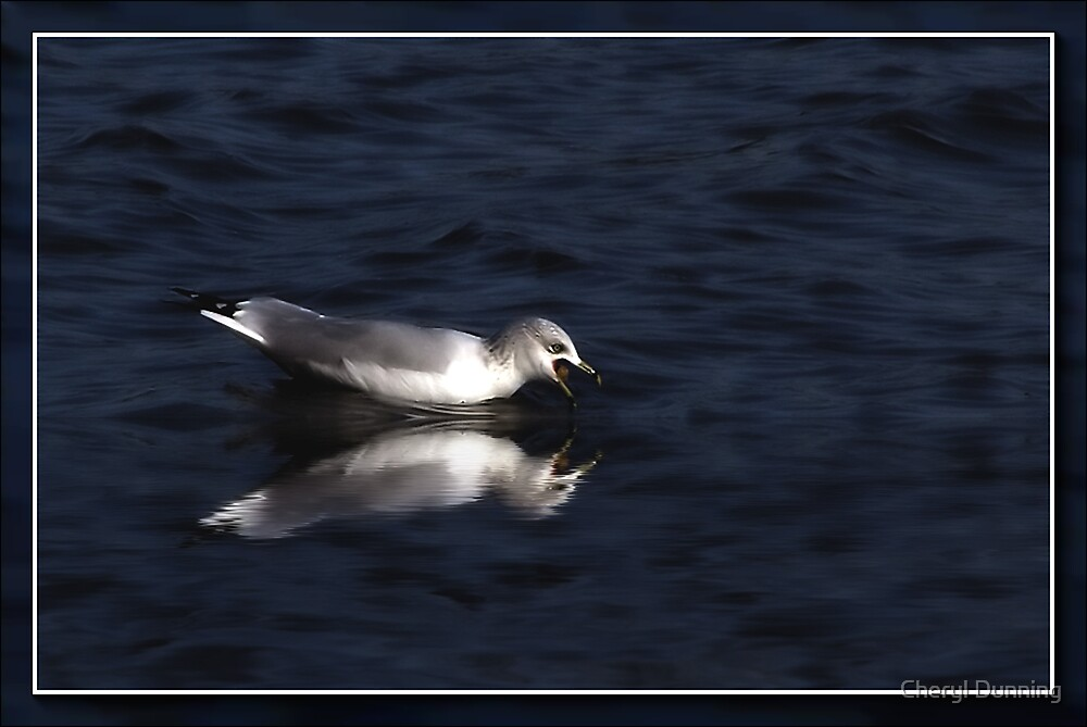reflected seagull by Cheryl Dunning