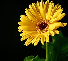 A Cheery Hello Daisy by Sheryl Kasper