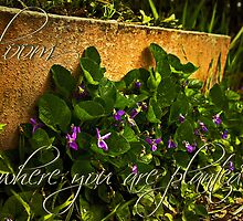 Bloom ... by Rosalie Dale