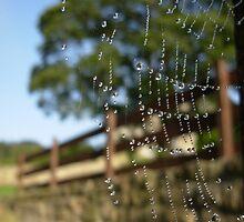 Charlottes Web by RoShin