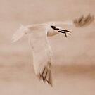 Gull & Fish by Terry Best