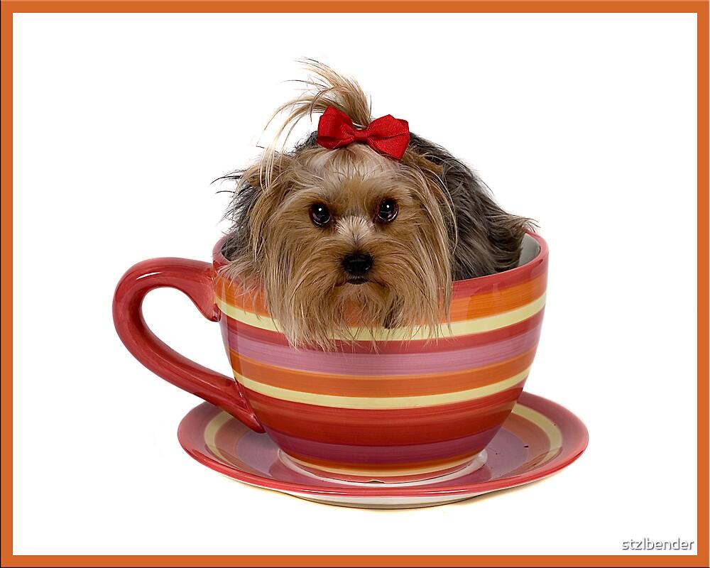 Teacup Yorkie?!? by stzlbender