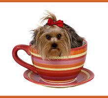 Teacup Yorkie?!? by stzlbender
