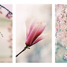 Blossom Triptych by Jessica Jenney