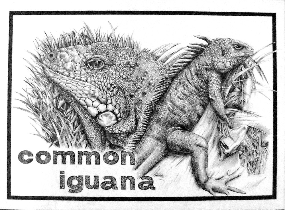 iguana by kelvin lee