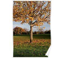 Glorious Autumn at The Oaks Park, Carshalton Poster