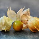 Physalis to some,, Ground Cherry to Others. by Larry Lingard-Davis