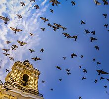 Avian Angels by thirdiphoto