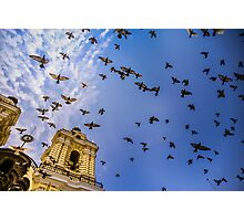 Avian Angels Photographic Print