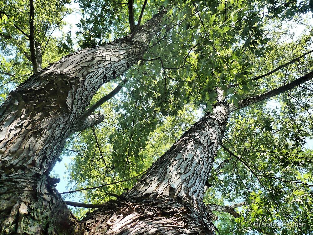 Look up its a Tree ! by Brandon Pittman