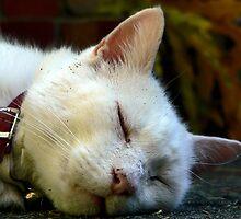 Fluffy Snoozing by margotk