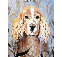 Cocker Spaniel in meadow Photographic Print
